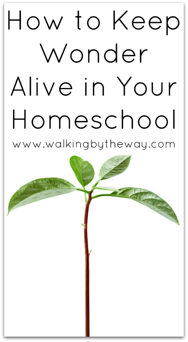 How to Keep Wonder Alive in Your Homeschool (Cultivating Curiosity Series) from Walking by the Way